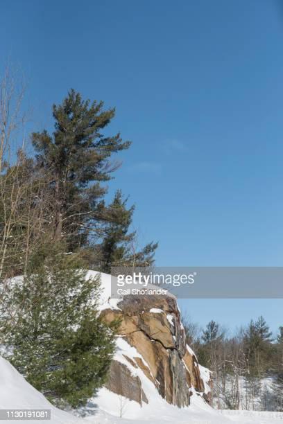 Muskoka Rocks and Trees