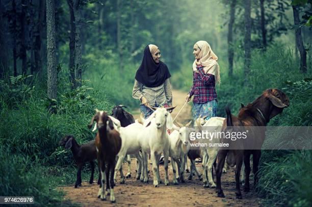 Muslim goat girl