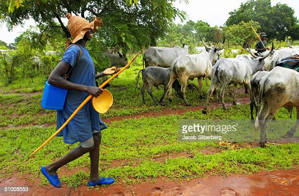 Muslim herder from the Fulani tribe tends his cattle near Shendam in central Nigeria May 27 2004 Farmers with crops and those with cattle are...