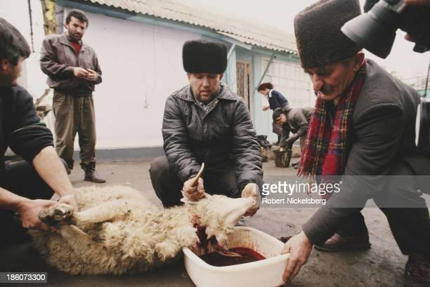 Muslim Ingush civilians slaughter a lamb during the East Prigorodny Conflict Ingushetia 1992