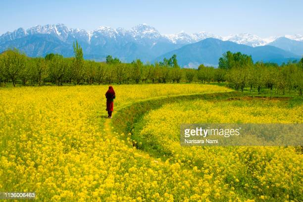 muslim kashmir girl in the beautiful valley of kashmir india. - kashmir valley stock pictures, royalty-free photos & images
