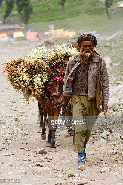 Muslim Kashmiri man walking with his pony carrying a load of Hay, on the Amarnath Cave trail . Local Kashmiri men and their working horses provide...