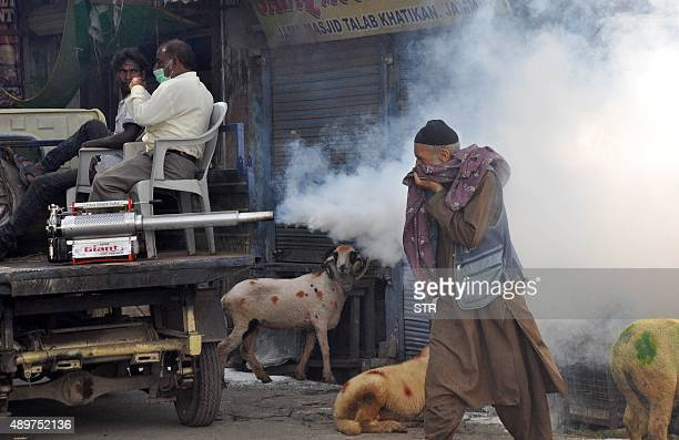 A muslim livestock vendor covers his face as Indian Municipal corporation workers spray DDT to prevent the spread of mosquitoborne dengue and...