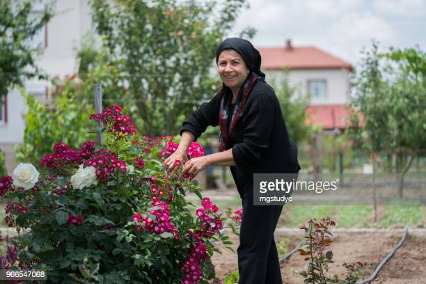 Muslim senior woman gardening in backyard