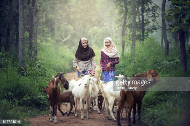 Muslim Women worker with goat