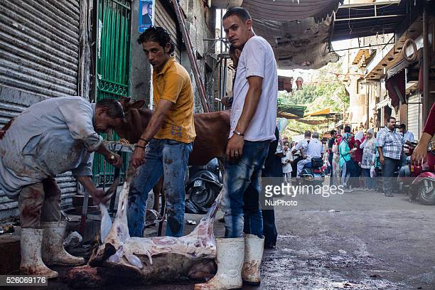 Muslims cutting sheep as offering on Eid alAdha sacrifice feast day in Cairo Egypt on September 24 2015 Eid alAdha prayers began at 600 GMT Cairo...