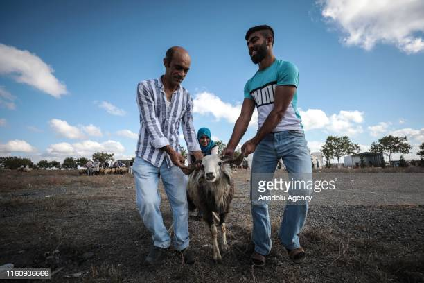 Muslims purchase sacrificial animals at a livestock market on the first day of Eid Al Adha in Sultangazi district of Istanbul Turkey on August 11...