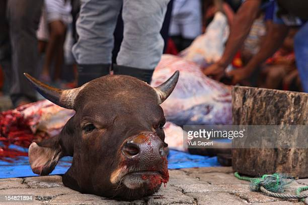 Muslims slaughter a cow during the holiday Eid alAdha or 'Hari Raya Haji' on October 27 2012 in Bintan Island Indonesia The threeday festival and...