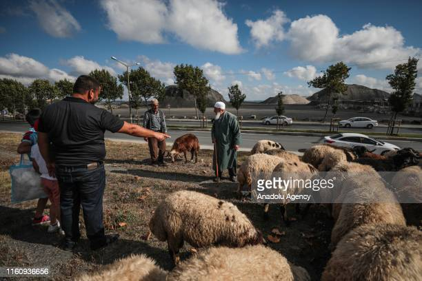 Muslims view sacrificial animals at a livestock market on the first day of Eid Al Adha in Sultangazi district of Istanbul Turkey on August 11 2019...