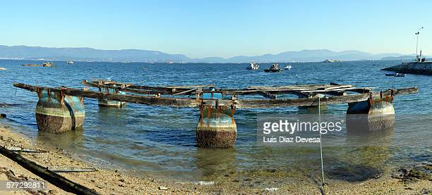 mussel beds in the beach - cozza zebrata foto e immagini stock