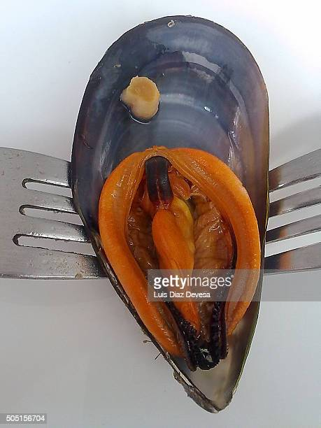 mussel composition with two forks - cozza zebrata foto e immagini stock