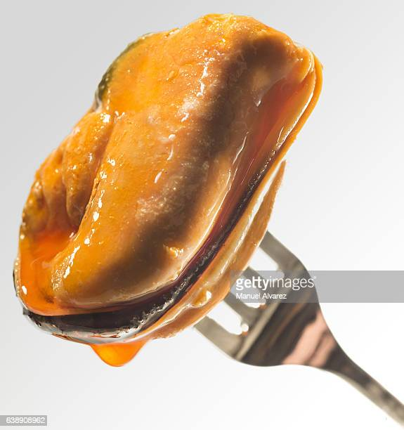 Mussel with holder