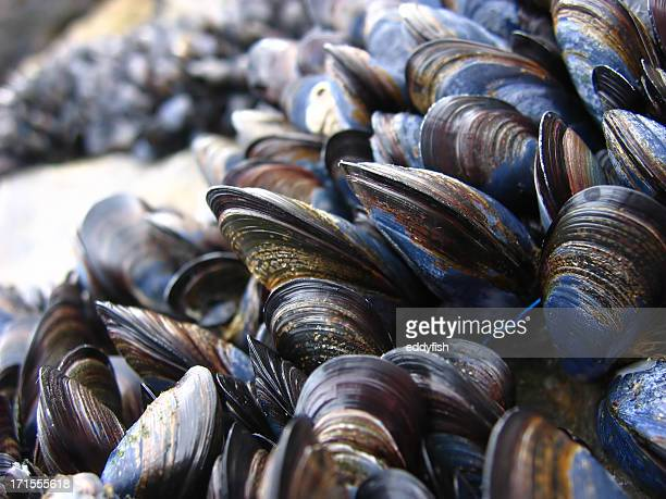 mussels 1
