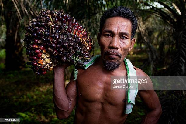 Mustafa poses with a batch of fruit that palm oil is extracted from he has been with the project eversince it commenced A village of green revolution...