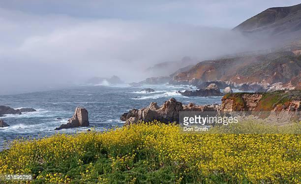 mustard and fog at sobranes point - don smith imagens e fotografias de stock