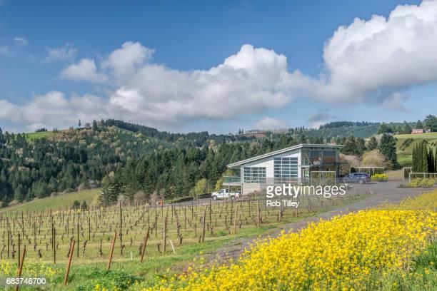 mustard blooming at winderlea vineyard - pinot noir grape stock photos and pictures