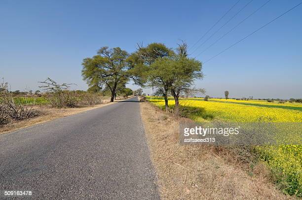 mustard road - punjab pakistan stock photos and pictures