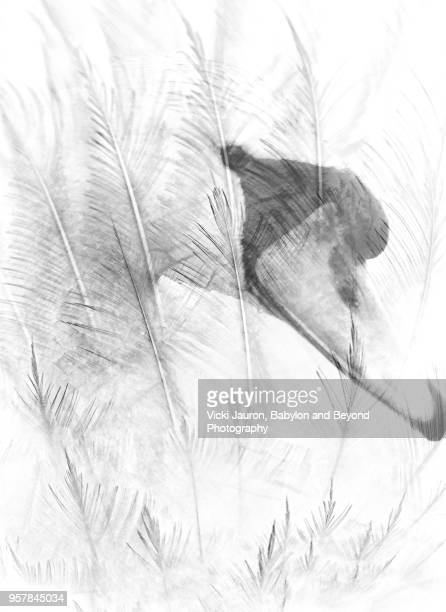 mute swan behind feathers - animal body part stock pictures, royalty-free photos & images