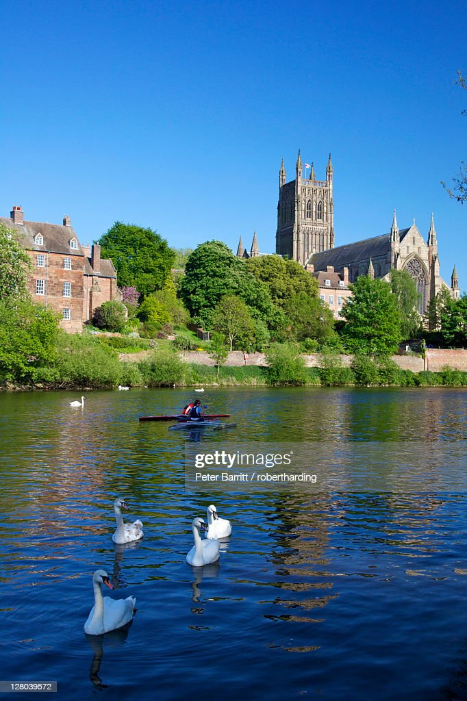 mute swans and canoeists on river severn spring evening. Black Bedroom Furniture Sets. Home Design Ideas