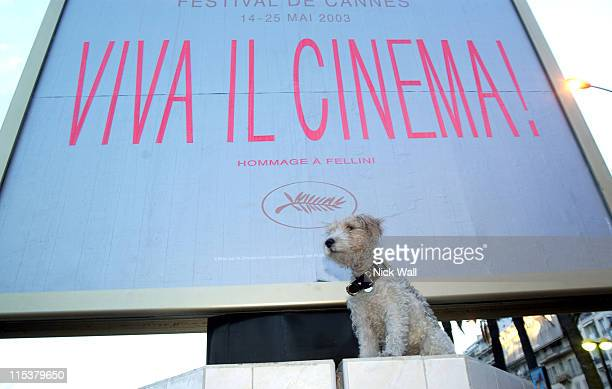 Mutley The Celebrity Dog during 2003 Cannes Film Festival The 2003 Palm Dog Awards at Palais des Festivals in Cannes France
