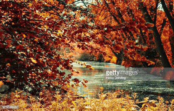 mutter natur - natur stock pictures, royalty-free photos & images