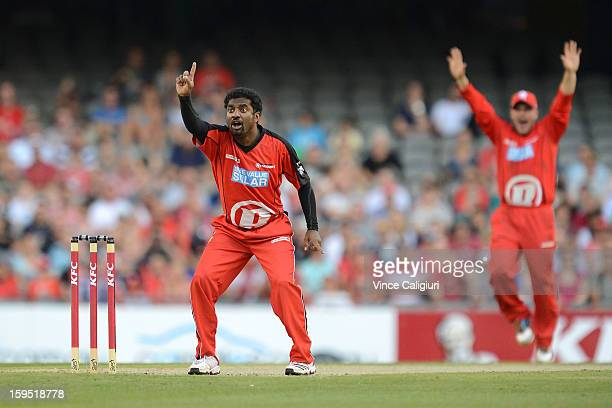 Muttiah Muralitharan appeals for lbw unsuccessfully during the Big Bash League Semi-Final match between the Melbourne Renegades and the Brisbane Heat...