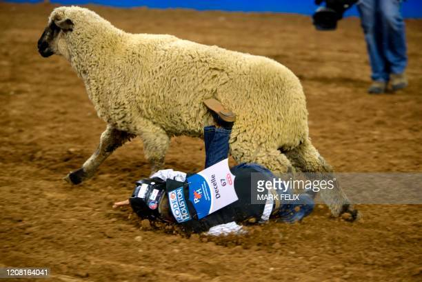 Mutton Bustin' participant Cal Decelle falls off a sheep during the Houston Livestock Show and Rodeo on March 6, 2020 in Houston, Texas.
