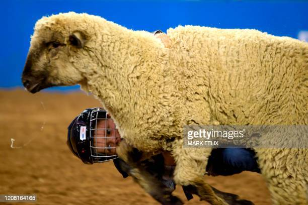 Mutton Bustin' participant Carson Smith falls off a sheep during the Houston Livestock Show and Rodeo on March 6, 2020 in Houston, Texas.