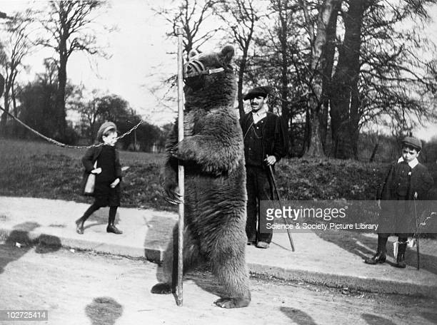 Muzzled bear dancing in the park, c.1900s. Photograph by Frank Meadow Sutcliffe . Sutcliffe is best known for his turn-of-the- century portrayals of...