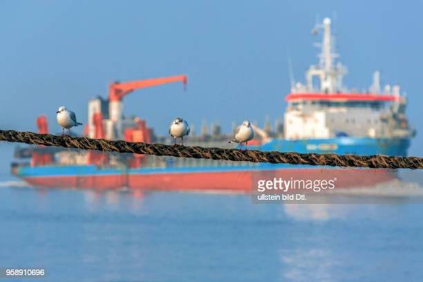 Möwen chillen vor fahrendem Schiff