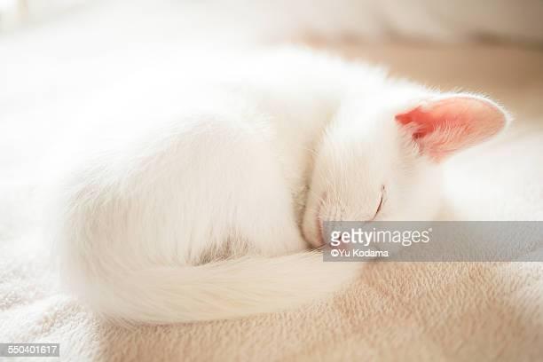 My cat sleeps on my bed.
