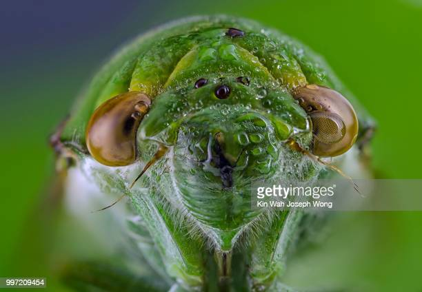 my face - cicada stock pictures, royalty-free photos & images