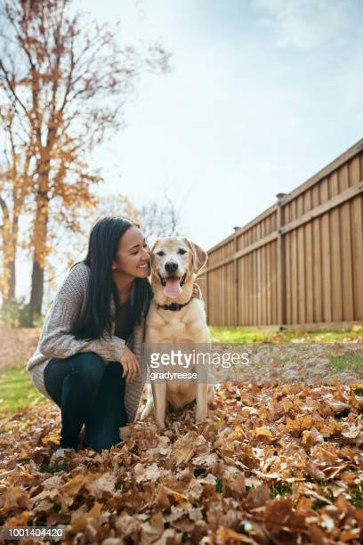 my labbie, my love - autumn dog stock pictures, royalty-free photos & images
