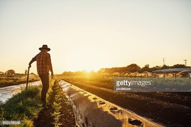 meu escritório tem a melhor vista de todos - trabalhador rural - fotografias e filmes do acervo