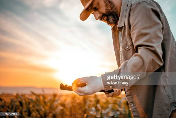 my preciousness - agronomist stock pictures, royalty-free photos & images