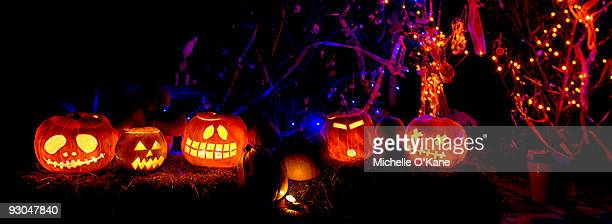 my pumpkin display - halloween lantern stock photos and pictures