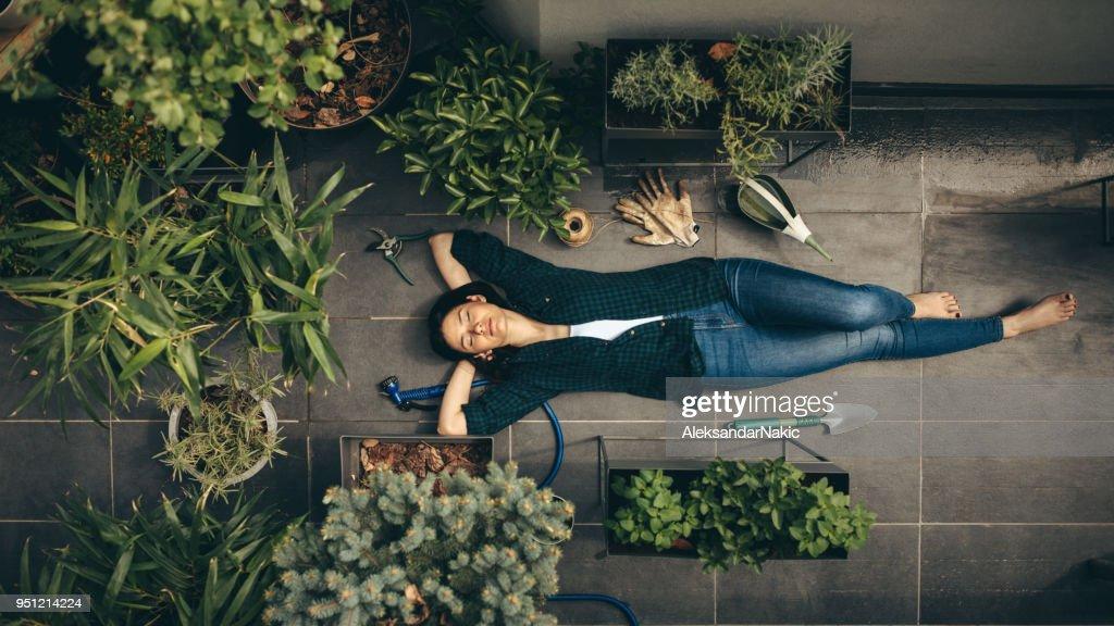 Mein Dachgarten : Stock-Foto