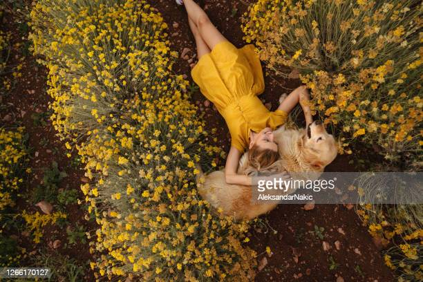 my warmest pillow - yellow dress stock pictures, royalty-free photos & images