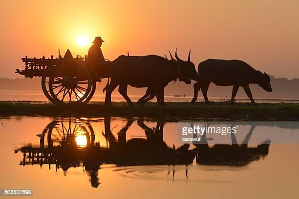 myanmar, bagab, people and bullcarts, dawn - ox cart stock photos and pictures