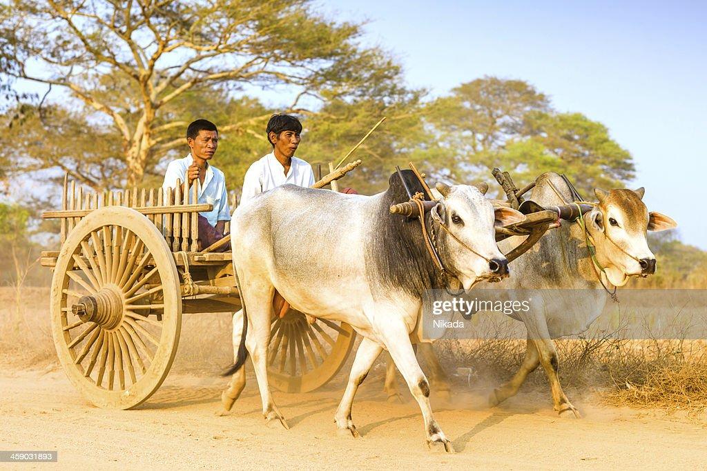 Myanmar Daily Life : Stock Photo