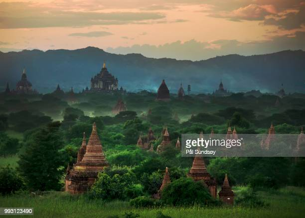 myanmar - nature - burmese cat stock pictures, royalty-free photos & images