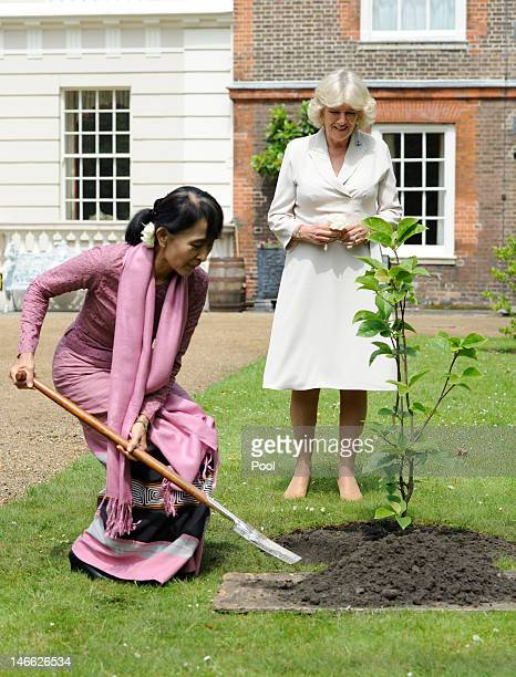 Myanmar opposition leader Aung San Suu Kyi plants a Magnolia tree in the gardens of Clarence House as Camilla Duchess of Cornwall watches on June 21...