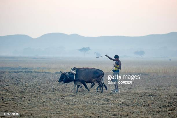 Myanmar province de Rakhine MraukU paysan travaille les champs Myanmar Rakhine state MraukU farmer working the fields