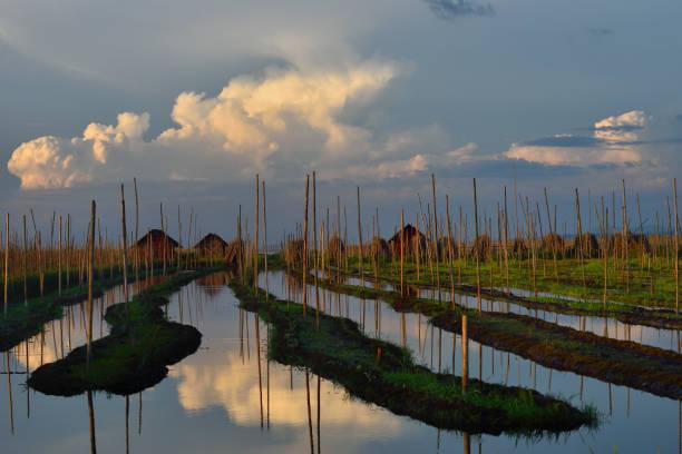 Myanmar, Shan State, Inle Lake, Kay Lar surroundings, Floating gardens