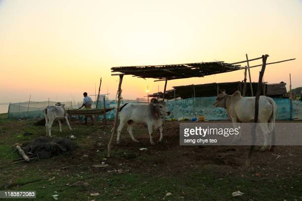 myanmar travelling scene at u bein bridge, mandalay, myanmar - teak wood material stock pictures, royalty-free photos & images
