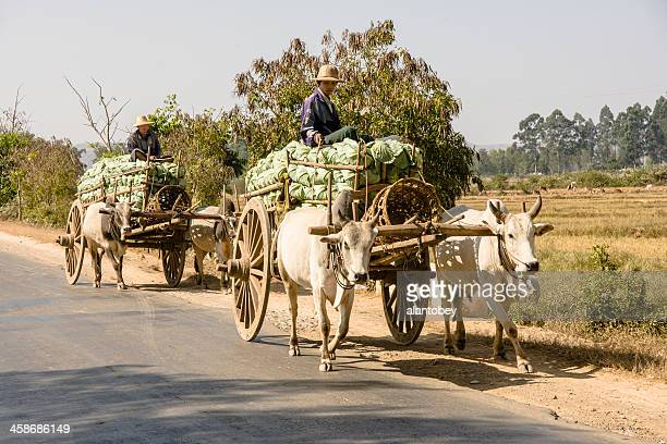 myanmar: two oxcarts on the road - animal powered vehicle stock photos and pictures