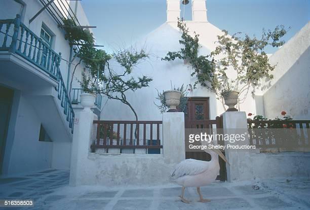 myconos street with pink pelican walking alone - ver a hora stockfoto's en -beelden