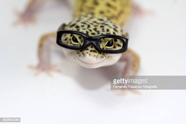 Myopic animal with glasses because he sees wrong