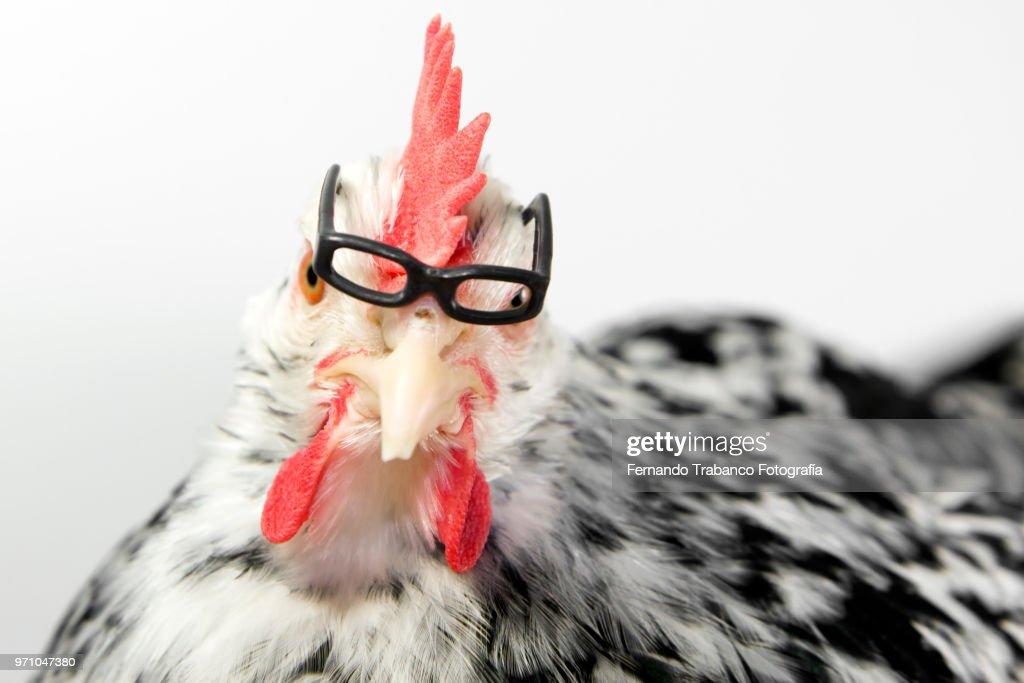 Myopic animal with glasses : Stock Photo