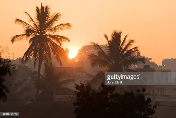 mysore, sunrise through palms - mysore - fotografias e filmes do acervo